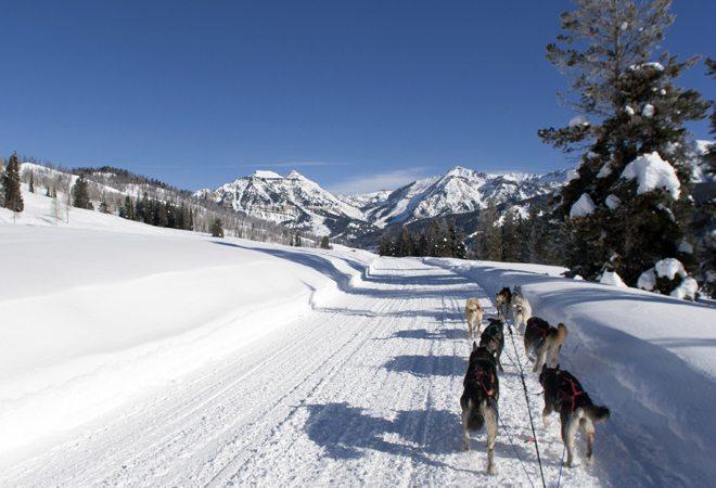 Jackson-Hole-Iditarod-Sled-Dog-Tours